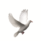 wedding logo dove